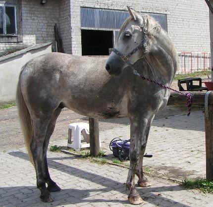 Decken vom lässt pferd frau sich Hunde und