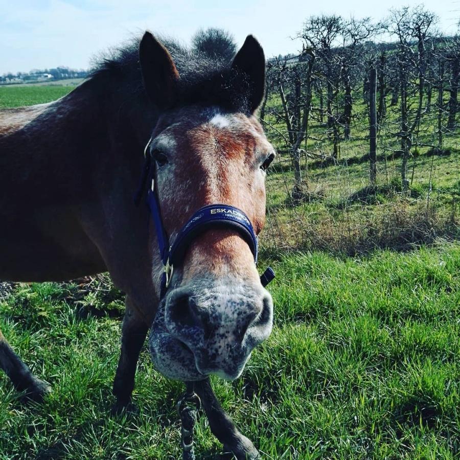 Pferd.De Forum