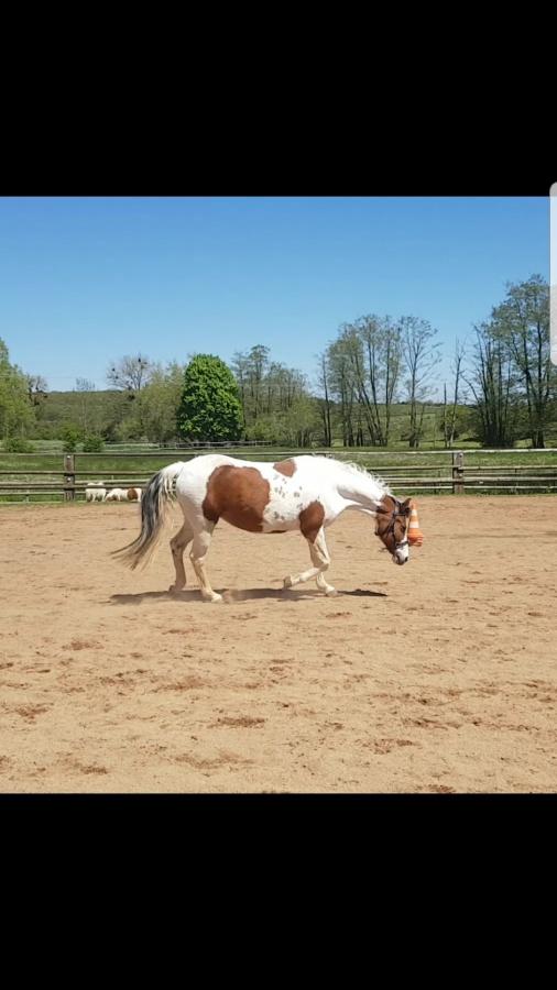 Mein Pferd hat Arthrose im Widerrist und Halswirbelsäule