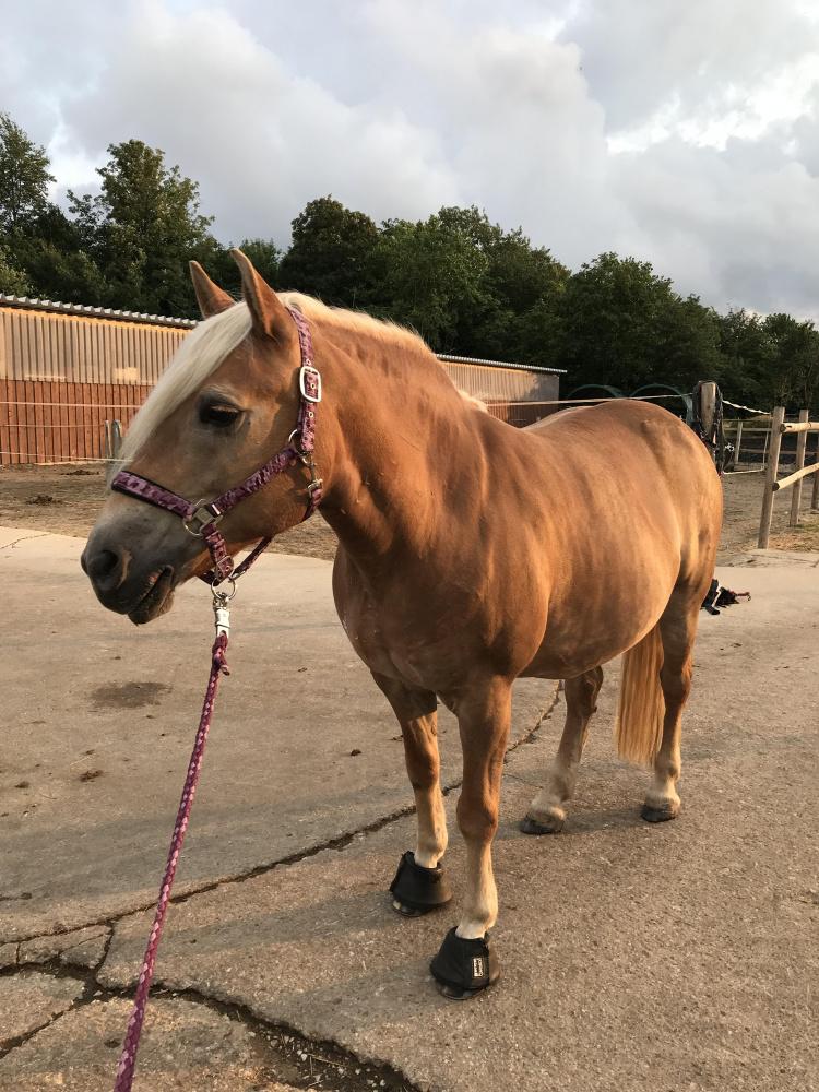 Decken vom lässt pferd frau sich Zoophilie