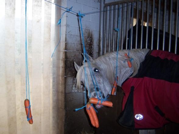 pferdespielzeug