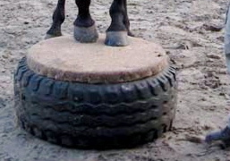 Podest Selber Bauen Forum Pferd De