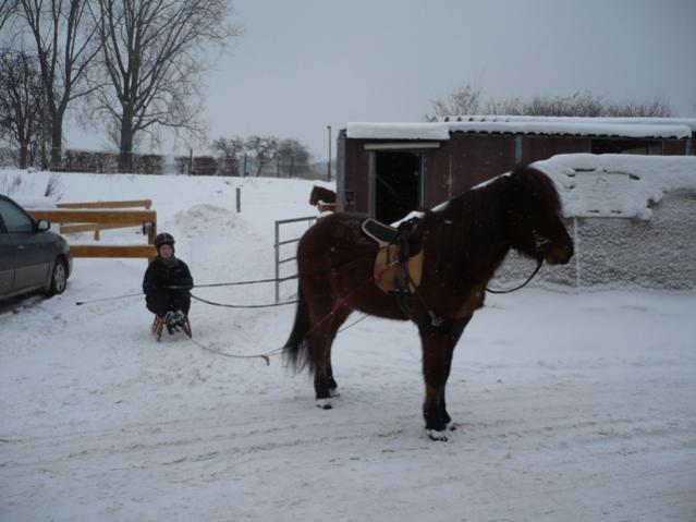 Skijöring Selber Bauen Forum Pferdde