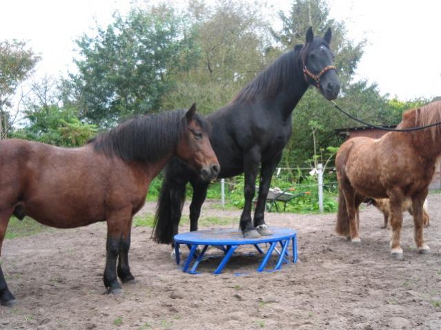 Wie Stabil Mussen Podeste Sein Podest Bauen Forum Pferd De