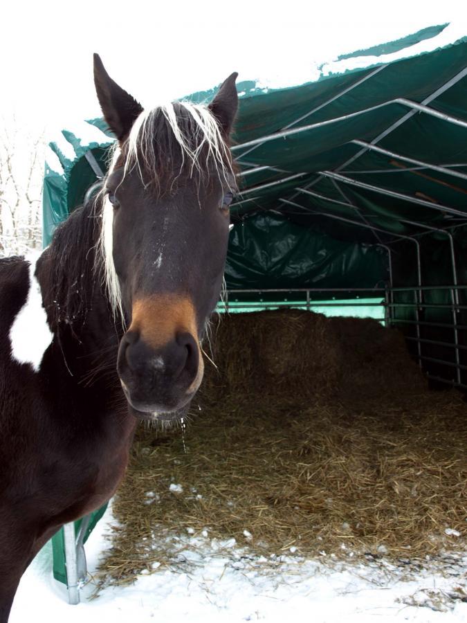 Frostsichere Tränke ohne Strom und Wasseranschluss - Forum Pferd.de