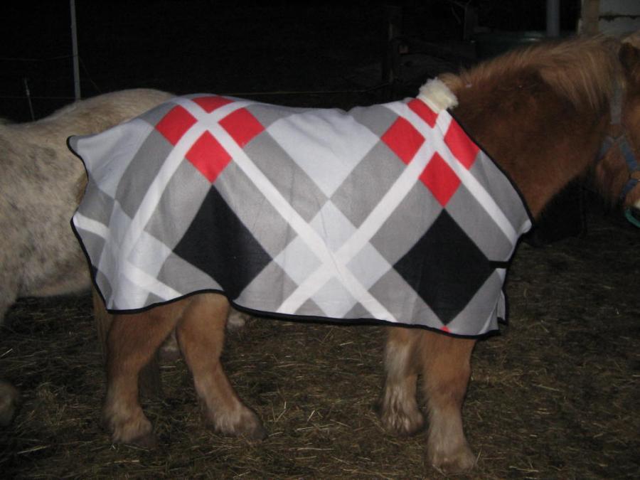 Abschwitzdecke für Shetty - Forum Pferd.de