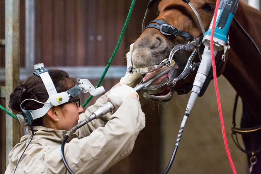 pferd de forum