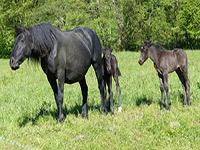 pferde und reiten sind unsere leidenschaft. Black Bedroom Furniture Sets. Home Design Ideas
