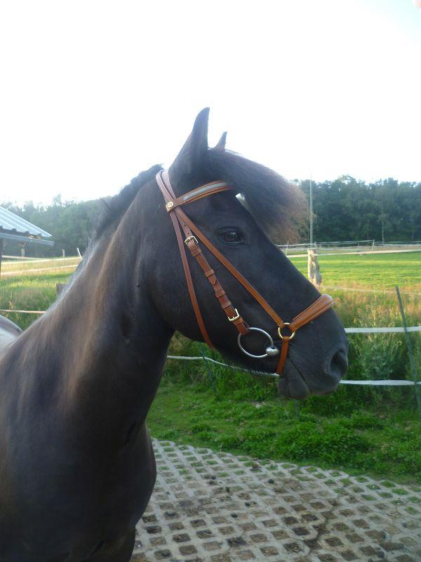 Forum Pferd