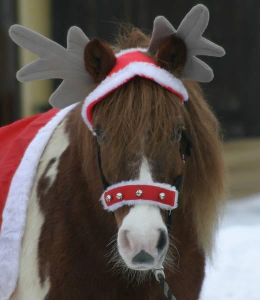 Merry christmas pferdebilder galerie im reitforum for Merry christmas bilder
