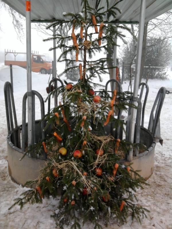 weihnachtsbaum mal anders pferdebilder galerie im reitforum. Black Bedroom Furniture Sets. Home Design Ideas