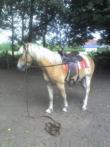Noddy Pferd