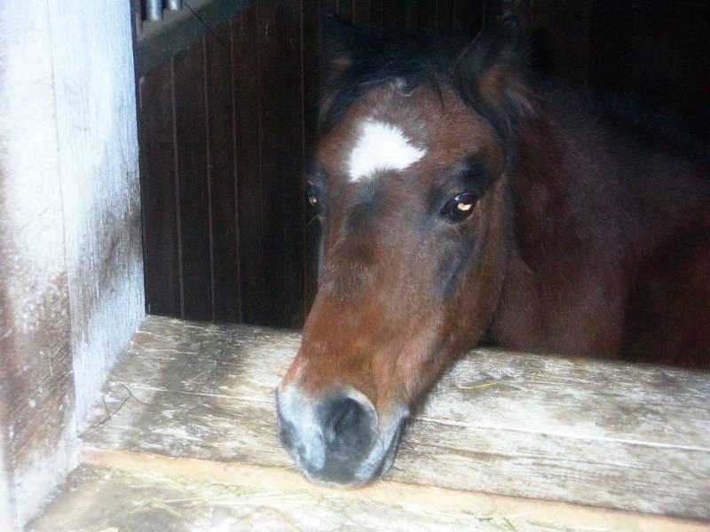 Meine Kleine Süße Pferdebilder Galerie Im Reitforum