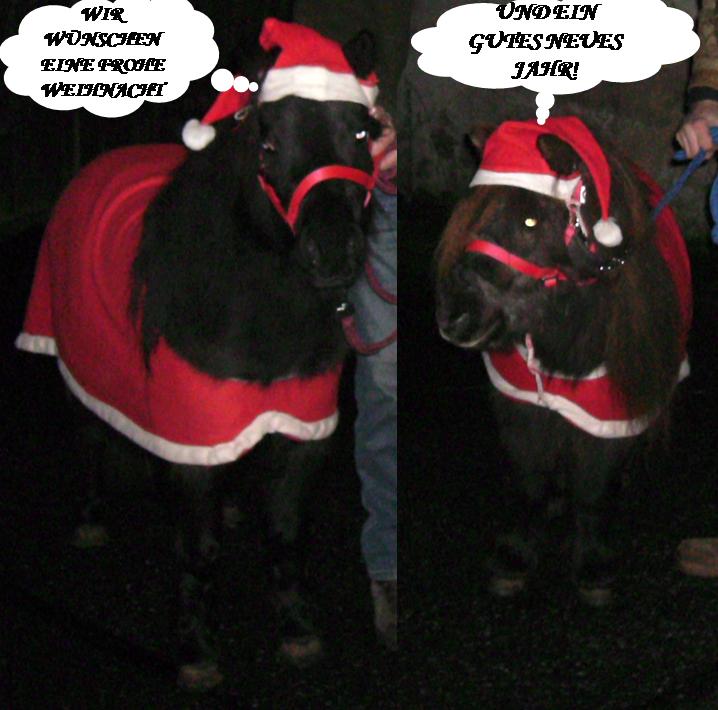 Frohe Weihnachten Pferd.Frohe Weihnachten Pferdebilder Galerie Im Reitforum
