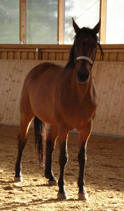 Meine Süsse Pferdebilder Galerie Im Reitforum